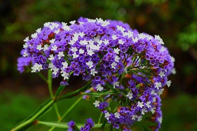 bílé a fialové květy