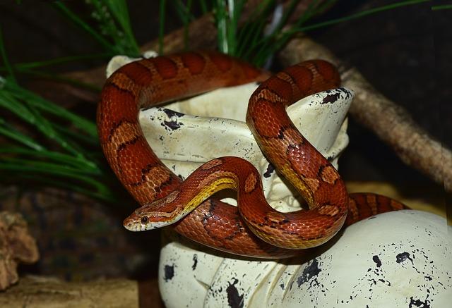 had užovka